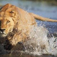 safari-botswana-09