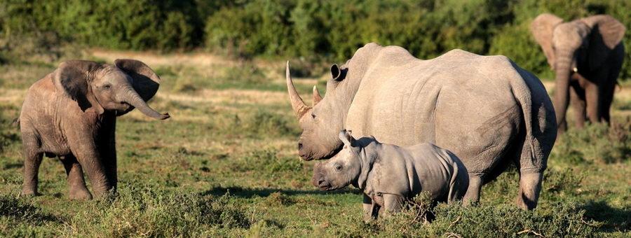 Namibie-faune-01