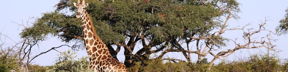 Parc National Hwange, Zimbabwe