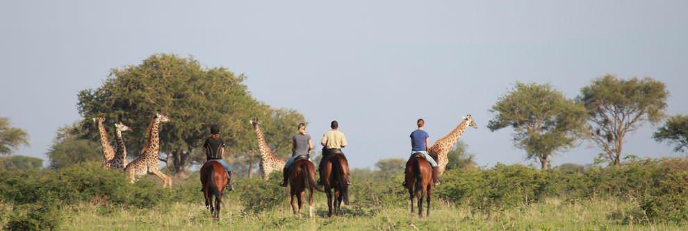 Manyara Ranch, Tanzanie