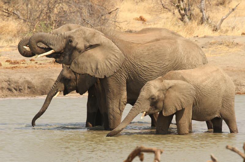 safari-zambie-zimbabwe-IMV_006