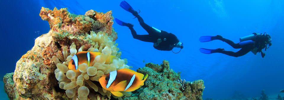 Plongée sous-marine au Mozambique