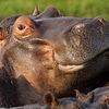 Safari en Zambie