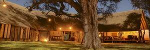 Camelthorn, Zimbabwe