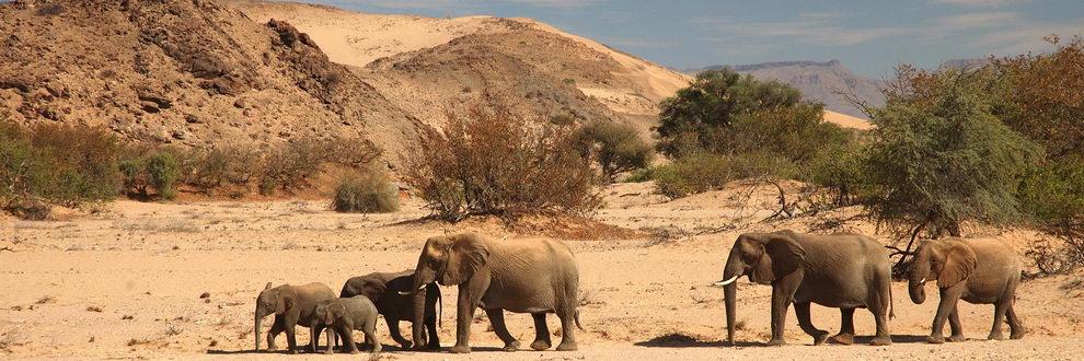 Safari en Namibie - Moringa