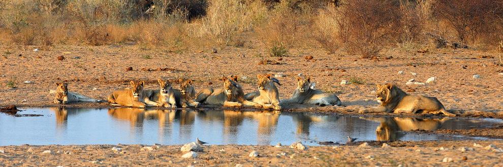 Safari Namibie, Botswana et Zimbabwe