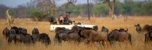 Linkwasha Camp, Hwange, Zimbabwe