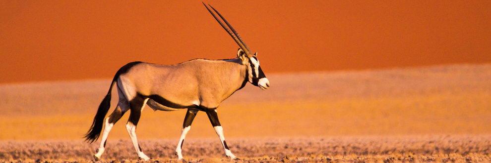 """Circuit en Namibie """"Oryx"""""""
