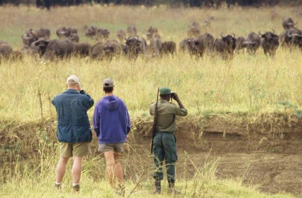 Safari à pied à Island Bush Camp, Zambie