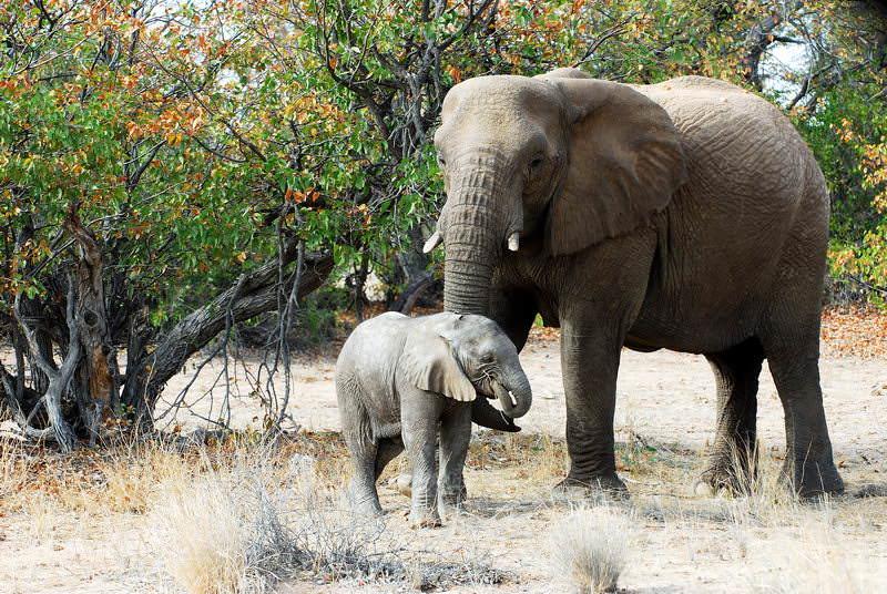 safari-namibie-moringa__04