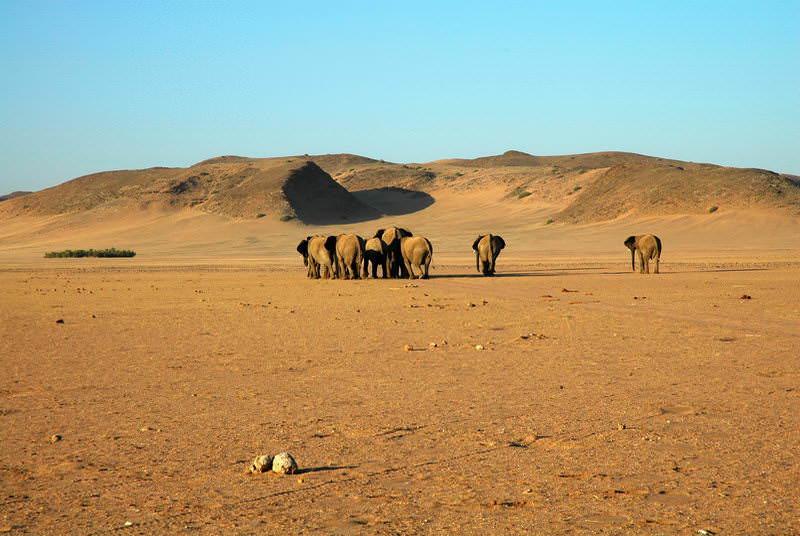 safari-namibie-moringa__05