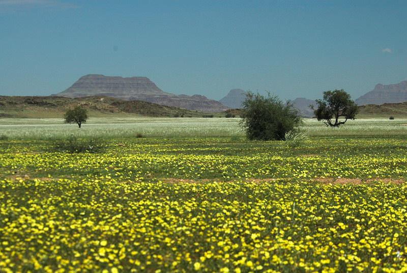 safari-namibie-moringa__07
