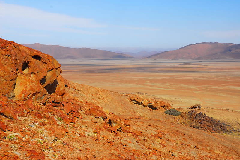 safari-namibie-moringa__09