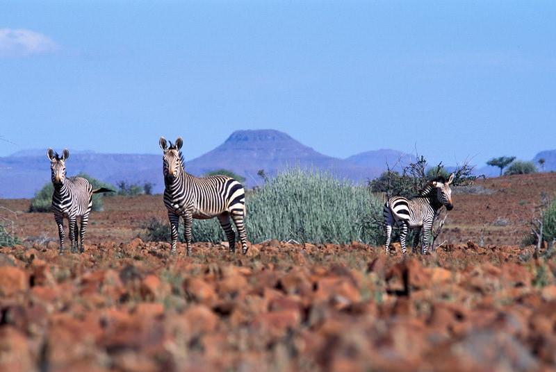 safari-namibie-moringa__11