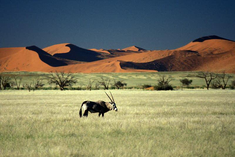 safari-namibie-moringa__12