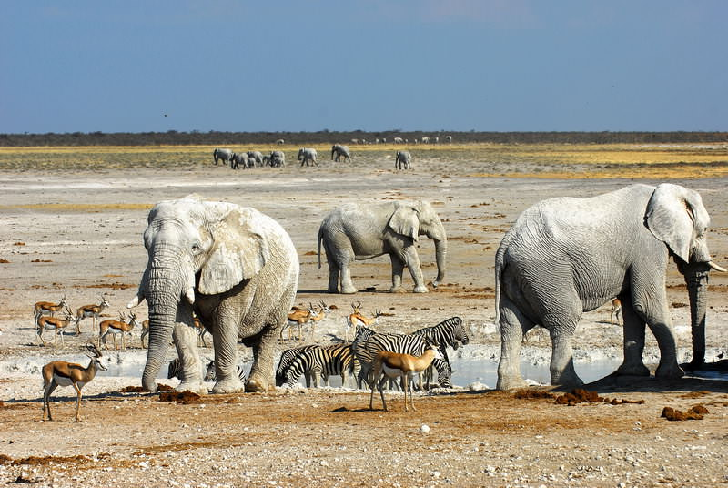 safari-namibie-moringa__13