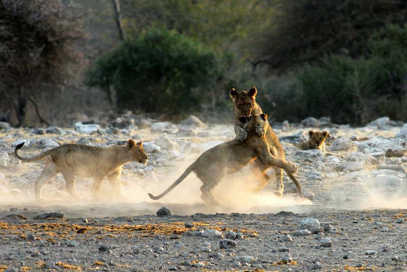 safari-namibie-moringa__14