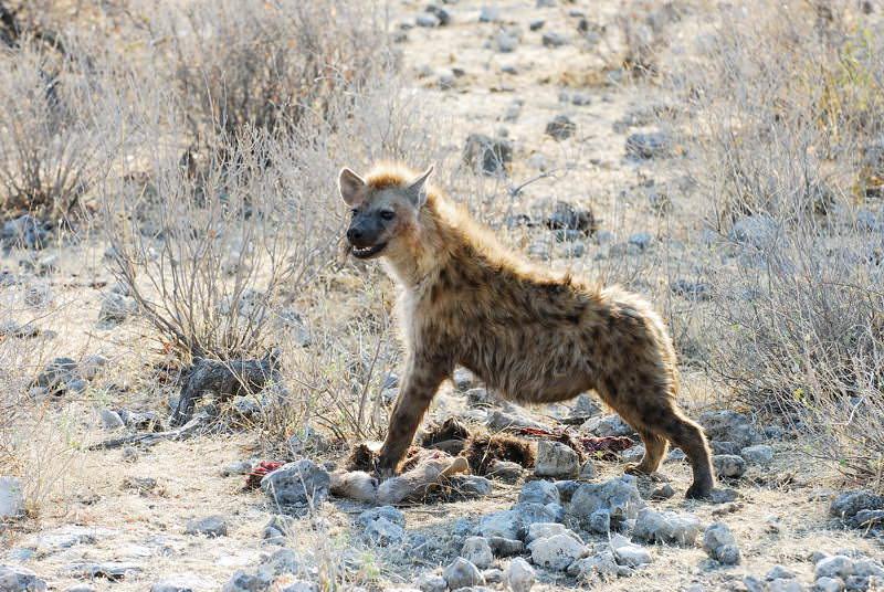 safari-namibie-moringa__15