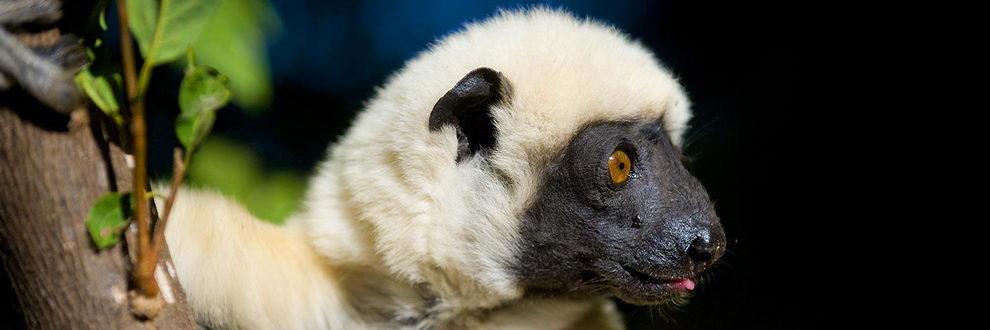 Parc national de Midongy du sud, Madagascar