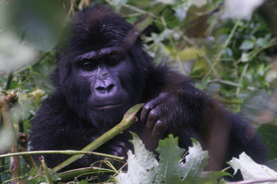 safari-ouganda-004