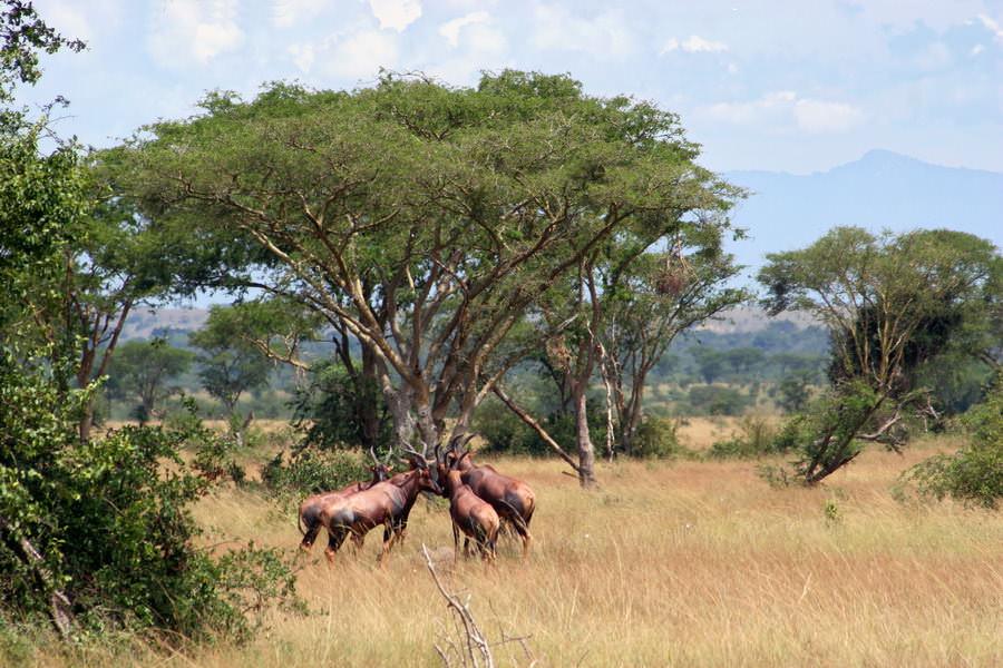 safari-ouganda-005