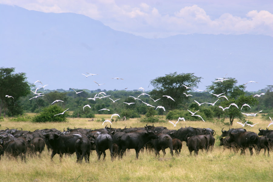 safari-ouganda-006