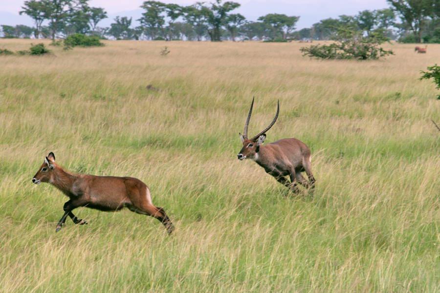 safari-ouganda-007