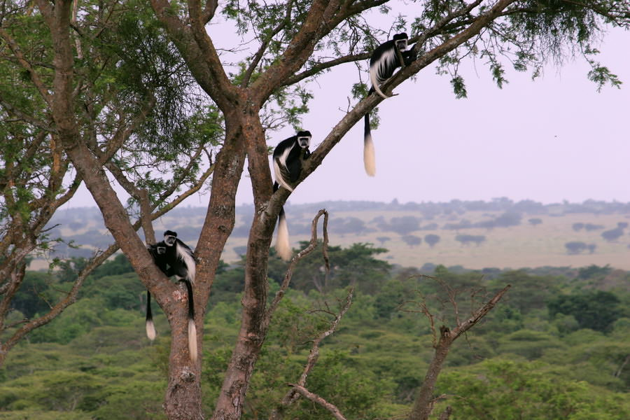 safari-ouganda-008