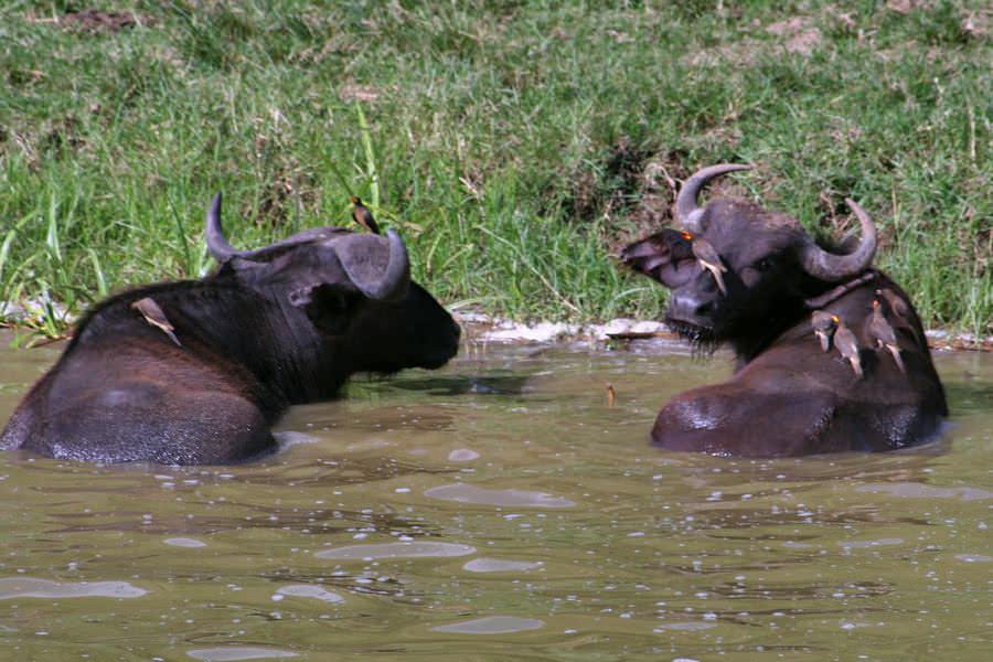 safari-ouganda-012