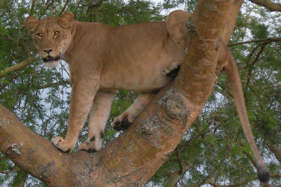 safari-ouganda-02