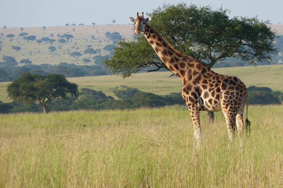 safari-ouganda-05