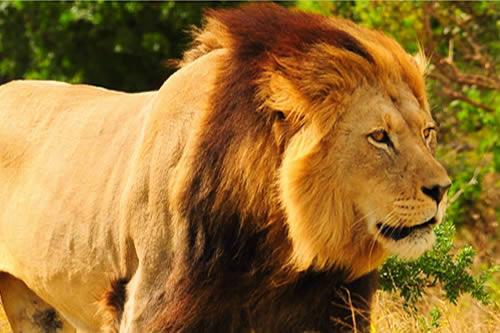 Safari dans le Nord-Ouest de l'Afrique du Sud