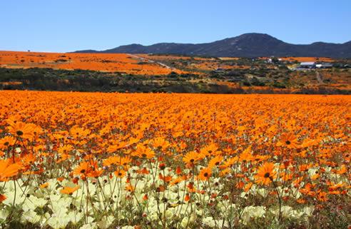 Cap-Nord, Afrique du Sud