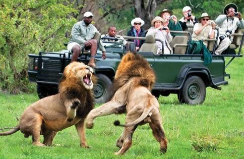 Safari en famille en Afrique du Sud