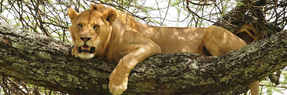Safari en Tanzanie - Esprit