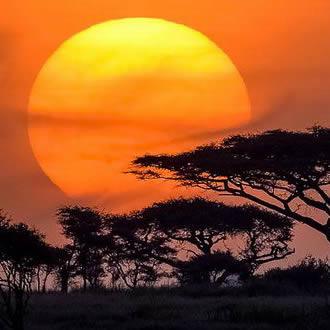 "Safari en Tanzanie ""Esprit"""