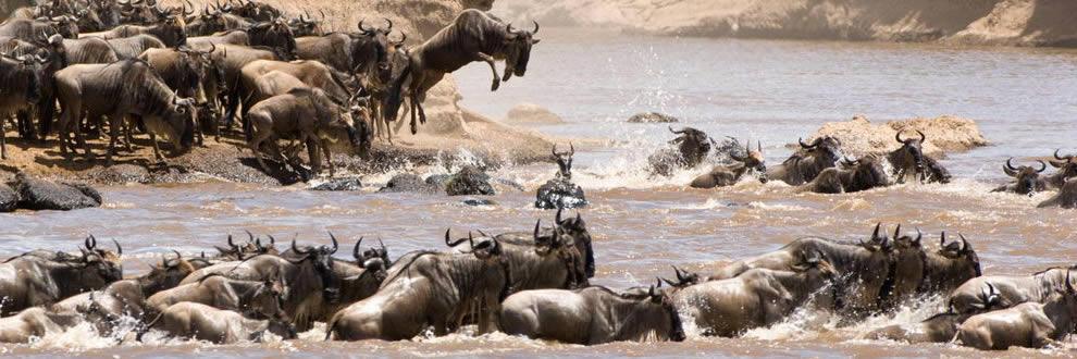 Safari en Tanzanie + Zanzibar