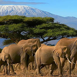 Safari Tanzanie + Zanzibar
